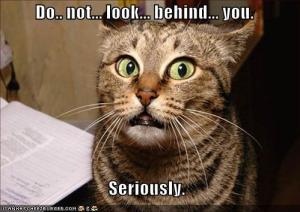 lol-cats-dont-look-behind-cat
